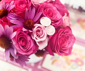 nature, pink, and roses image