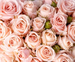 wallpaper, nature, and roses image