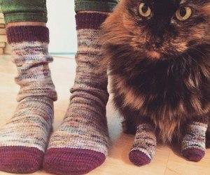 cat, socks, and animal image