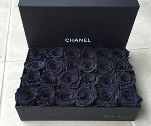 black and black roses image