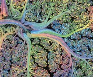 art, science, and neuroscience image