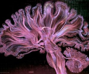 art, brain, and science image