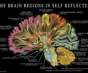 brain, science, and neuroscience image