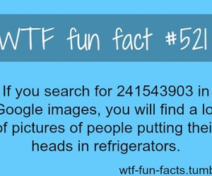 wtf facts image