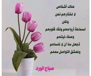 صباح الخير, صباح الورد, and صباحات image