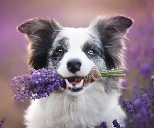 animal, dog, and purple+ image
