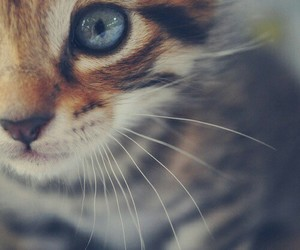 awesome, beautiful, and cat image