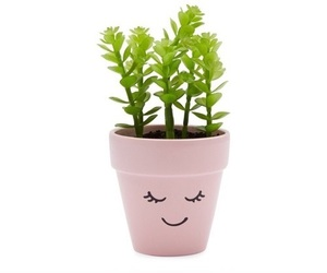 plants, pink, and png image