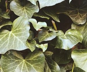 leaf, tropic, and april image