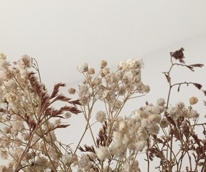 autumn, flowers, and vintage image
