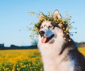 dog and village image