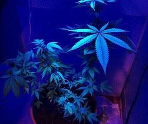 weed, blue, and marijuana image