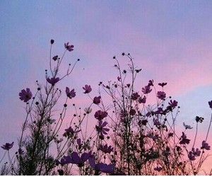 flowers, inspired, and tumblr image
