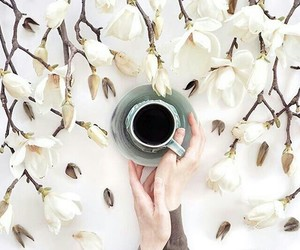 blossom, coffee, and flowers image