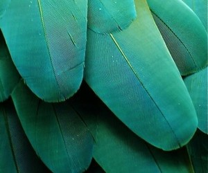 green, feather, and bird image