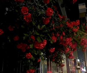 flowers and night image