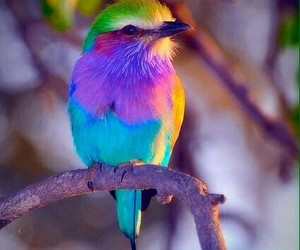 bird, colorful, and colors image