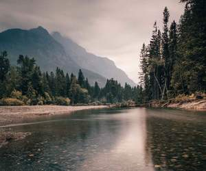 beautiful, river, and forest image