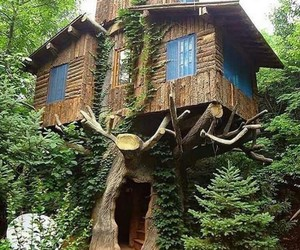 cool, green, and wood image
