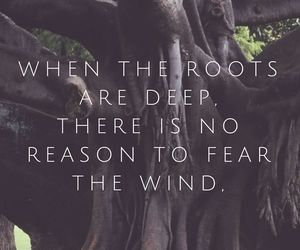 quotes, roots, and fear image