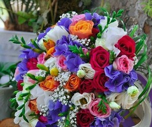colurs and flowers image