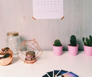 cactus, decoration, and room image