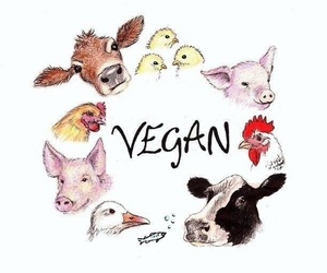 animal rights, vegan, and go vegan image