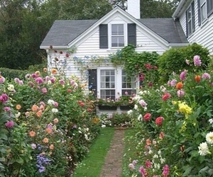 cottage, flowers, and spring image