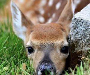 animal, bambi, and nature image