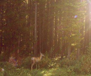 deer, forest, and indie image