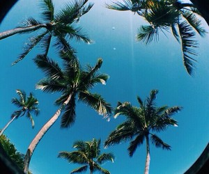 palmtrees and summer image
