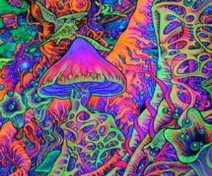 mushroom, trippy, and colors image
