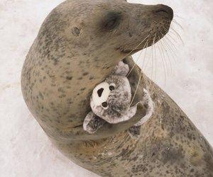 seal image