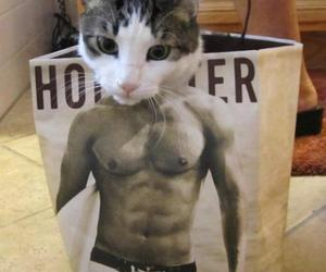 cat, funny, and hollister image
