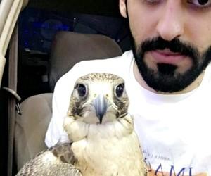 arab, falcon, and arabic image