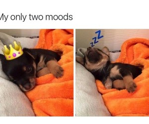 mood and puppy image