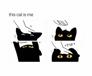 black, cat, and cuddle image