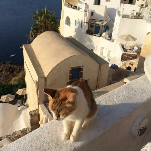 cat, animal, and Greece image