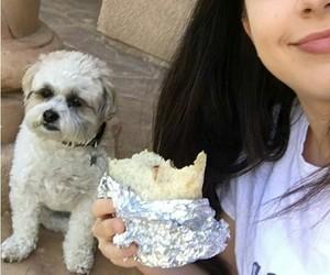 dog, twins, and youtube image