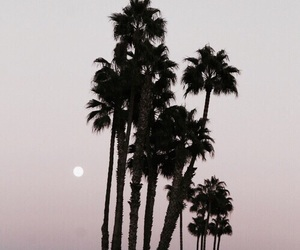 summer, sunset, and palms image