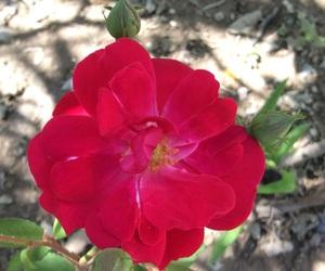 flores, naturaleza, and rancho image