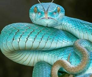 snake, blue, and beautiful image