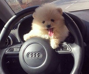 car, animal, and audi image