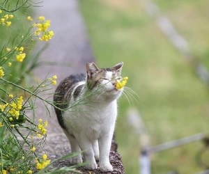 cat, spring, and flowers image