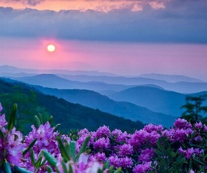 flowers, mountains, and dreamy image