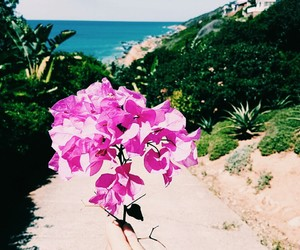 beautiful, tropical, and flower image