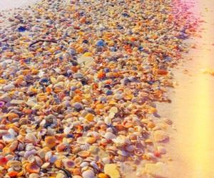 beach, ocean, and seashells image