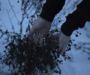 hands, flowers, and nature image