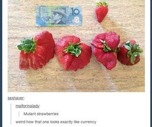 funny, live, and strawberry image