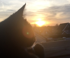 beautiful, cat, and grey image